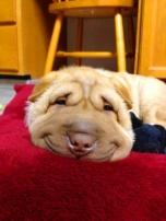 ペットが喜ぶデザマン